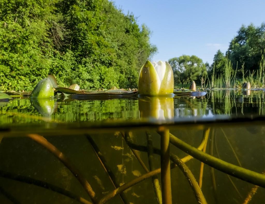 Klares Wasser in einem zurückgewonnenen Naturteich Moderner Schwimmteich